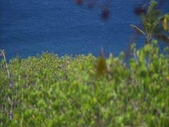 Bird on Branch (Rack from Ocean) Stock Footage
