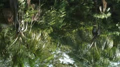 Rain forest reflection on rippled water Stock Footage
