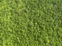 Aerial of Trees in Hilo Stock Footage