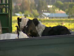 Hunting Dogs Stock Footage