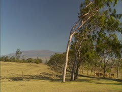 Hawaii Island Ranch Stock Footage