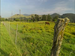 Farm with Horse Grazing Stock Footage