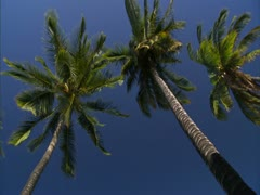 Palm Trees and Ocean - stock footage