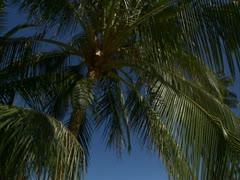 Palm Trees, Ocean and Kohala Mountain Stock Footage