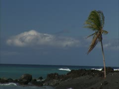 Black Sand Beach and Palm Tree Stock Footage