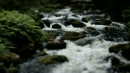 Stock Video Footage of Powerful Flowing Wild Forest River