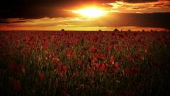 Dramatic sky over the poppy fields Stock Footage