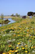 Flowery field at Noirmoutier in l'Ile in France Stock Photos