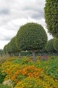 Stock Photo of Formal garden, flowers and box tree cut (France)