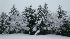 Beautiful snow Stock Footage