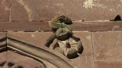 Two indian palm squirrel on old house wall Stock Footage