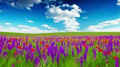field of flowers and the cloudy sky - stock footage