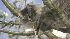 Cat biting a twig on a tree in the wintertime Stock Footage