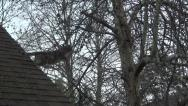 Stock Video Footage of Feral Cat jumping from Roof