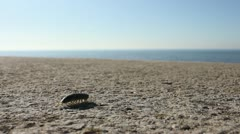 Woodlouse on seawall Stock Footage