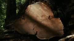 A felled tree with many tree rings in the forest. Stock Footage