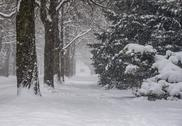 Heavy Snowfall Lake-Effect Snow Stock Photos