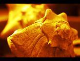 Macro shot of beautiful yellow sea shell Stock Photos