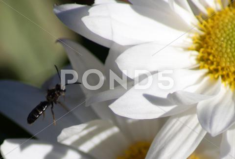 Stock photo of close up of white daisy