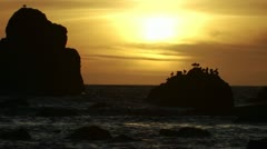 Seagulls perch on a rock at sunset along the Oregon coast. - stock footage