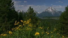 Springtime and flowers with the Grand Tetons background. - stock footage