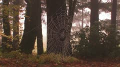 A spider weaves its web in golden morning light. Stock Footage