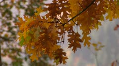 Vivid autumn colors light up the trees. Stock Footage