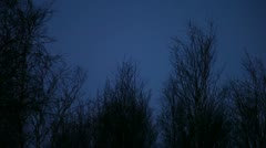 Scarey trees night sky 03 Stock Footage