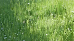 Summer Leaves of Grass and Wild Flowers Swaying with Gentle Breeze Stock Footage