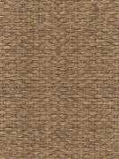 Reed texture Stock Illustration