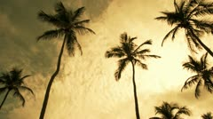 Windswept Palms Trees Stock Footage
