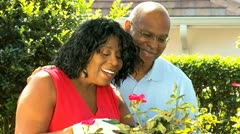 Senior African American Couple Tending Garden - stock footage
