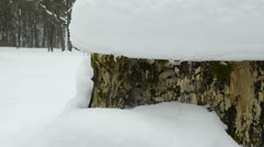 Tree stump cover melting winter snow spring water drop fall down Stock Footage