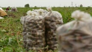 Stock Video Footage of Sack Of Beet