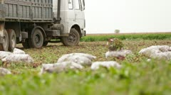 Beet Field: Truck Moving Past Stock Footage