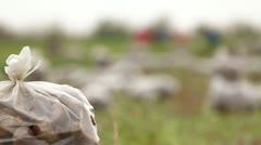 Harvest: Sacks Of Sugar Beets - stock footage