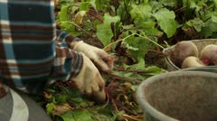 Beets Stock Footage