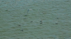 Seagulls Afloat Stock Footage