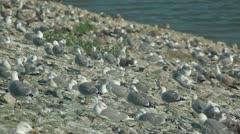 Colony Of Birds Stock Footage
