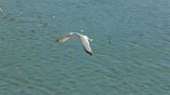 Sailing Bird Stock Footage