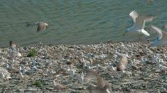 Seagulls Over Lake Stock Footage