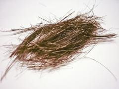 Stock Illustration of isolated piece of hair in white background