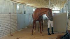 Horseback Riding Preparation. Time Lapse Stock Footage
