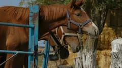 Horses In Paddock Stock Footage
