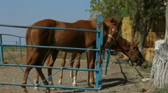 Three Horses In Paddock - stock footage