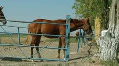 Paddock: Three Horses Stock Footage