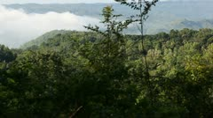 Panning the rainforest from top point Stock Footage