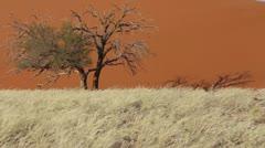 Namib Desert Dune 45 Landmark - stock footage