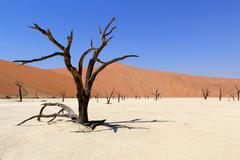 Sossusvlei dead valley landscape in the nanib desert near sesriem Stock Photos