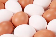collection of eggs - stock photo